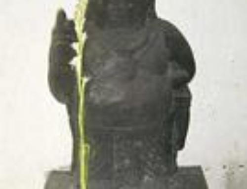 Laya Bindu Yoga